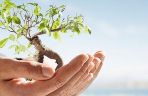 حمایت از درختکاری