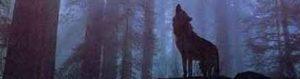 مطمئن باشید خواهید توانست از شر گرگ درنده خودارضایی رهایی پیدا کنید و مجددا زندگی زیبایی را تجربه کنید.